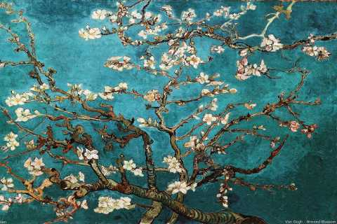 Amsterdam: Van Gogh Museum Tour including Entry Ticket
