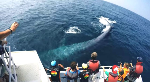 2-daagse walvis spotten en Zuid Sri Lanka Tour