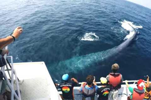 2-Day Whale Watching & Southern Sri Lanka Tour