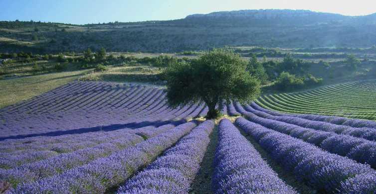 Van Aix-en-Provence: Halve middag middag lavendeltour