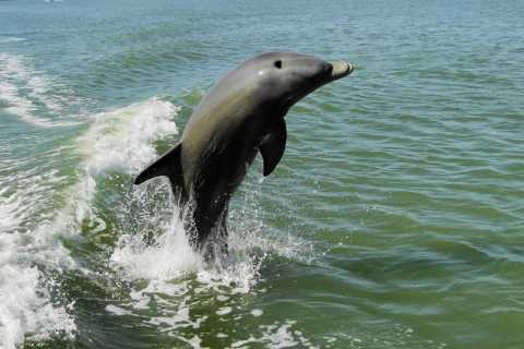 Marco Island: 2-Hour Dolphin, Birding, and Shelling Tour