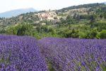 Pays de Sault Lavender Tour from Aix-en-Provence
