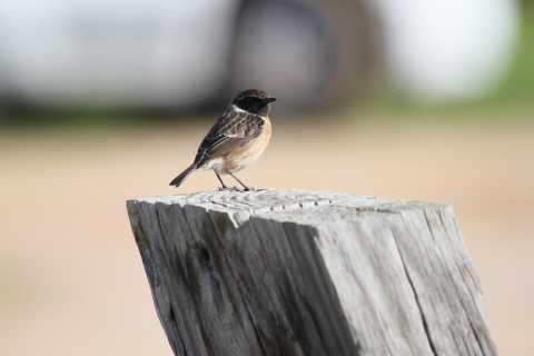 Albufeira Bird Watching