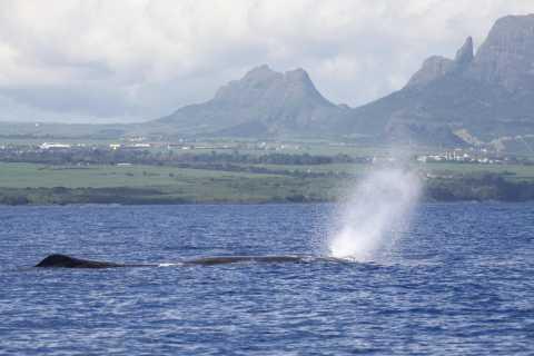 Black River: nado con delfines y avistamiento de ballenas en lancha rápida