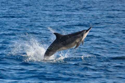 Nado privado con delfines