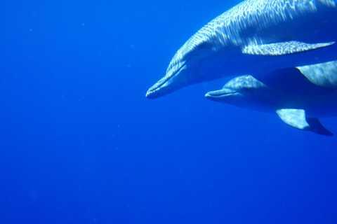 Encuentro privado de delfines y avistamiento de ballenas