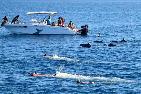 Tour en lancha motora: baño con delfines en Black River