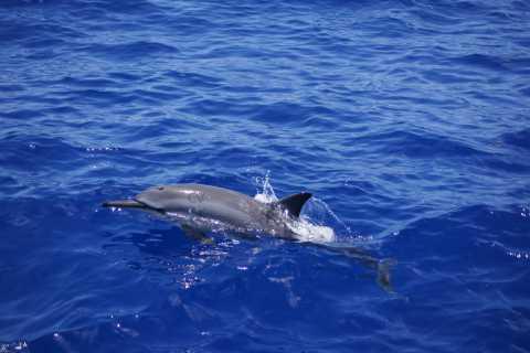 Isla de Benitiers: natación compartida con delfines y barbacoa