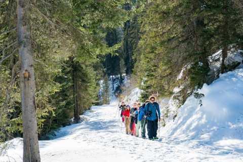 Snowshoe Trekking in the Swiss Alps