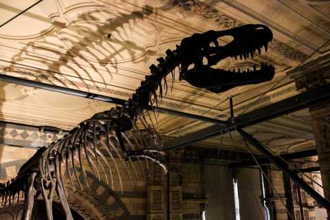 Excursão sem filas ao Museu de História Natural de Londres