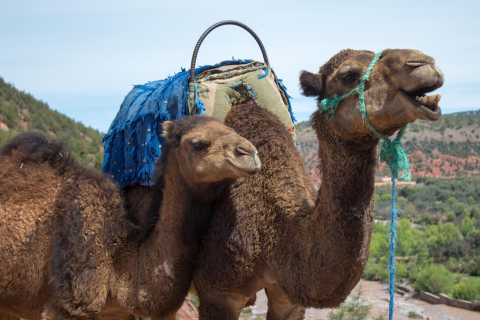Imlil: Full–Day Tour with Camel Ride & Lunch from Marrakech