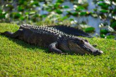 De Miami: Parque Everglades c/ Aerobarco e Show Selvagem