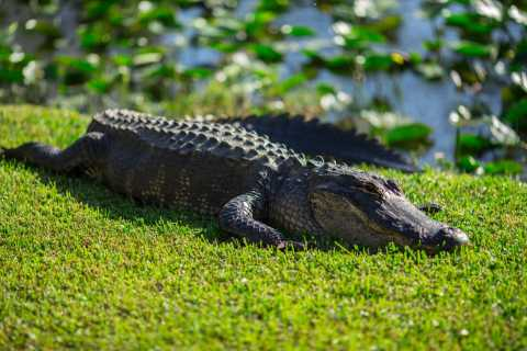 From Miami: Everglades Park Airboat Ride & Wildlife Show
