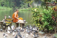 Chiang Mai: Wat Umong & Doi Suthep Tour de meio dia de grupo pequeno