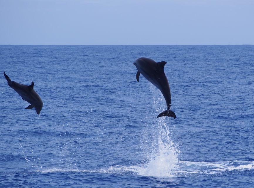 Rejs katamaranem i oglądanie delfinów i wielorybów