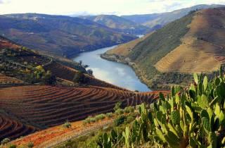 Douro Valley Private Ganztagestour von Porto aus