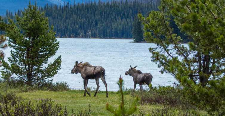 Tour di Jasper Wildlife and Waterfalls con Lakeshore Hike