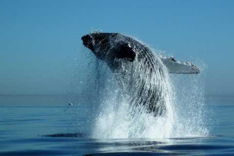 Punta Cana: día de observación de ballenas