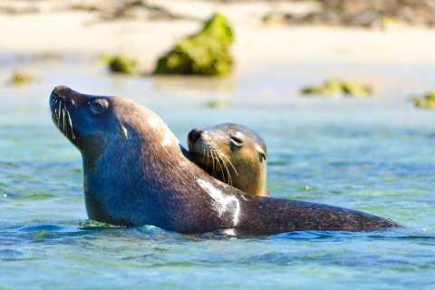 Croisière au parc marin des Îles Shoalwater et visite de l'île aux pingouins