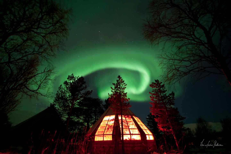 Tromsø: Polarlichter und Husky-Erlebnis inklusive Dinner