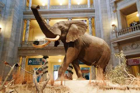 National Museum of Natural History Guided Tour