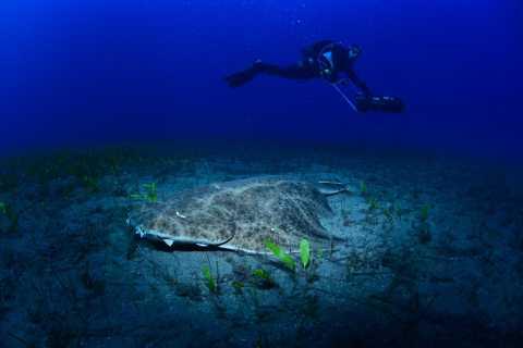 Tenerife: Diving w/ Underwater Scooter (DPV)