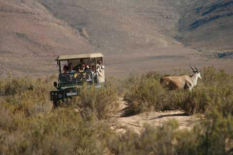 Aquila Game Reserve Full Day Combo Safari
