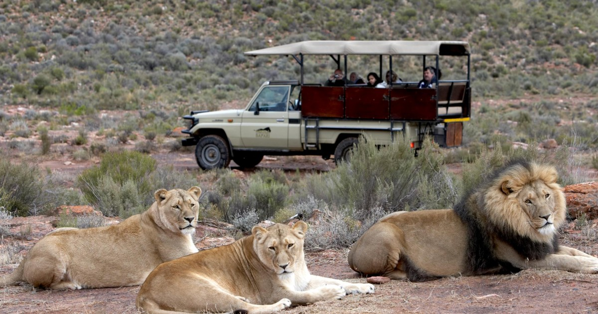 Aquila Private Game Reserve Early Morning Safari Drive