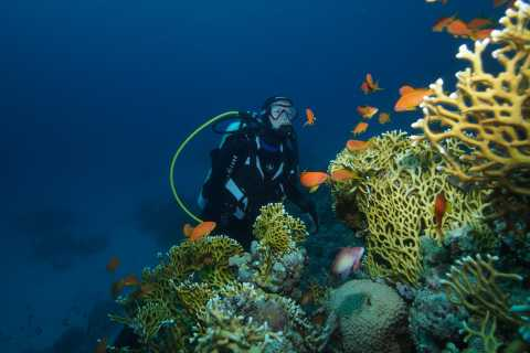 Tenerife: Full-Day The Best Dives for Certified Divers