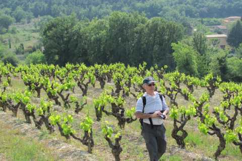 Chateauneuf du Pape: Private Guided Walking Tour