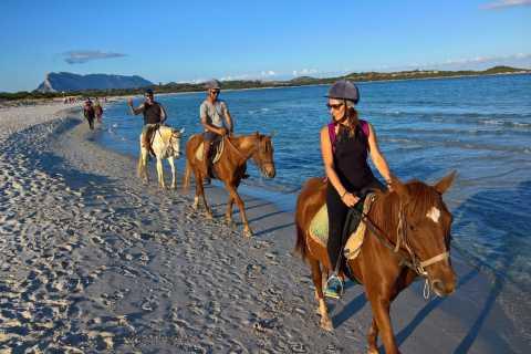 From Chia: Cagliari Half–Day Horseback Riding Tour