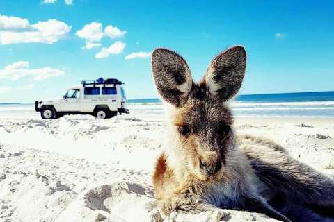From Brisbane: Bribie Island 4WD Nature Adventure