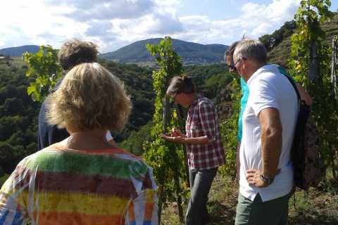 From Lyon: Cheese and Wine of the Rhône Valley