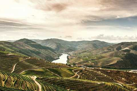 Vale do Douro: Wine and Food Tour from Porto