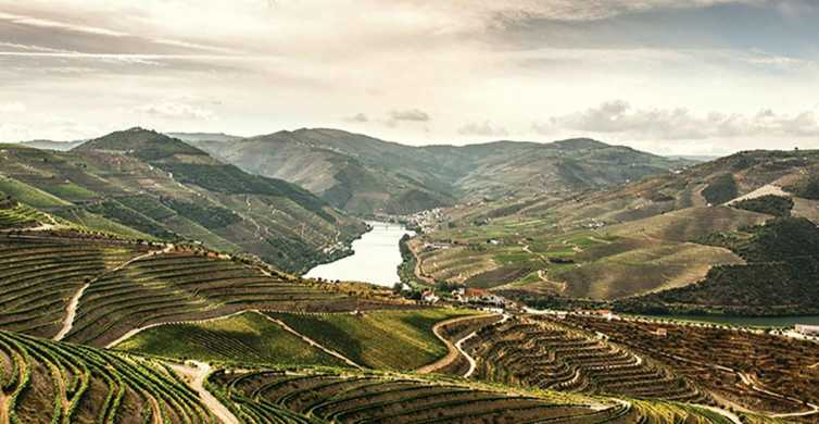 Douro Valley: Wine and Food Tour from Porto