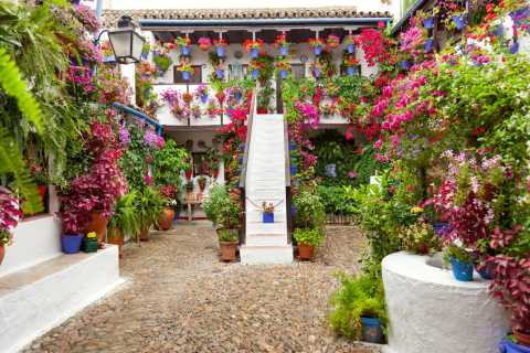 Cordoba's Authentic Patios: 2-Hour Tour with Tickets