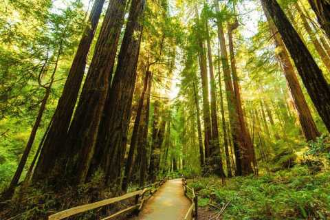 Bike the Golden Gate Bridge and Shuttle to Muir Woods