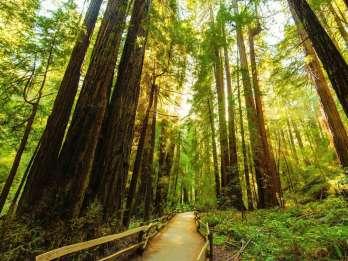 Golden Gate Bridge Fahrradtour und Shuttle nach Muir Woods