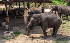 Elephant Sanctuary & Kanchanaburi Highlights Private Tour