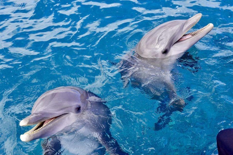 Całodniowa wycieczka na rafy koralowe: pływanie z delfinami, snorkeling i lunch