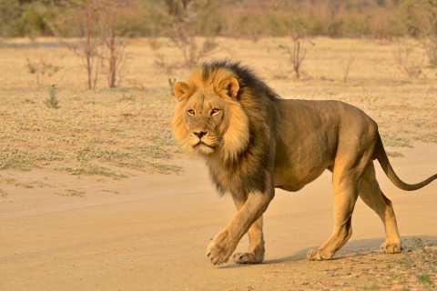 From Durban: Half-Day Private Safari Tour