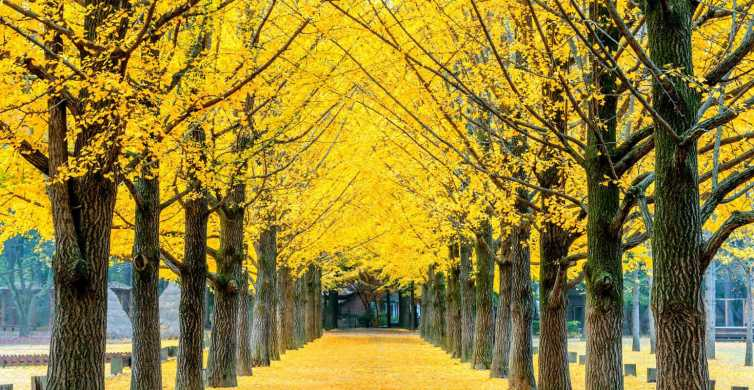 Namiseom, Petite France, Garden of Morning Calm & Rail Bike