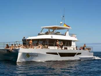 Morgendliche Katamaran-Bootstour