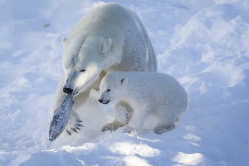 Ranua Wildlife Park Opastettu kierros Rovaniemeltä - Rovaniemi, Suomi |  GetYourGuide
