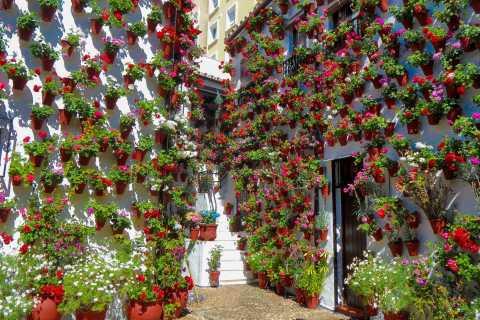 Córdoba: Guided Tour of the Patios