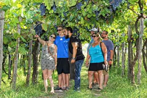 From Sorrento: Vesuvius Winery Tour, Tasting & Lunch