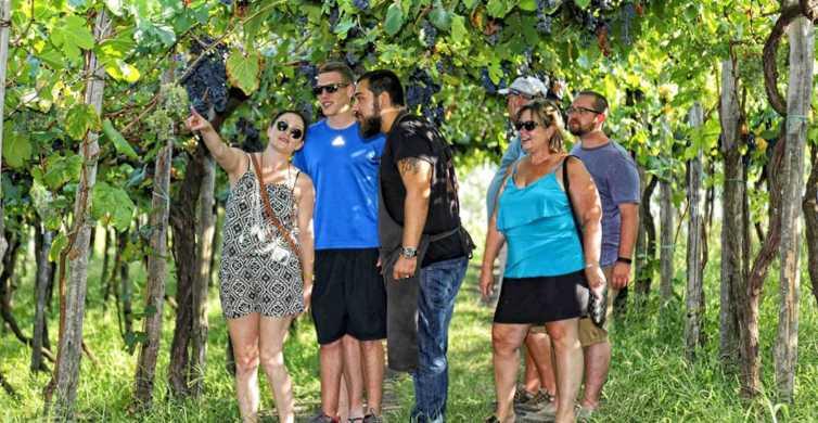 De Sorrento: Vesuvius Winery Tour, degustação e almoço