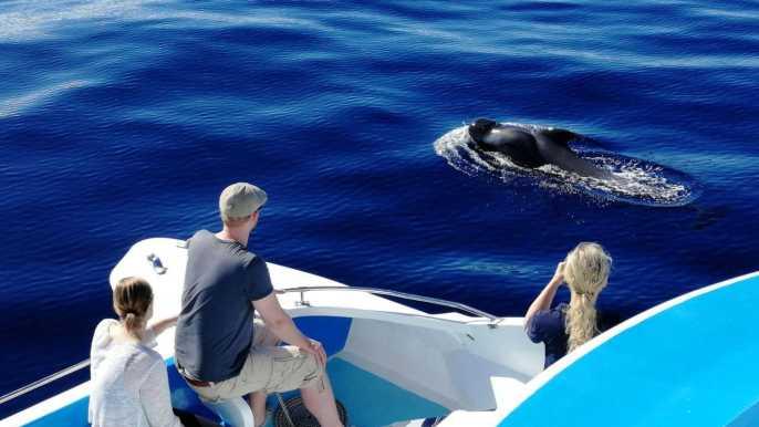 From Tazacorte: Catamaran Cruise of La Palma