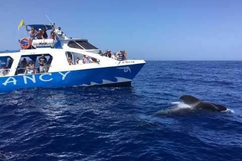 Fancy II La Palma: Safari Boat Tour