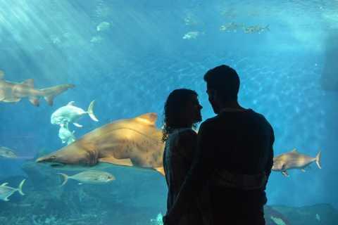 Seville: Minibus Tour, Aquarium and River Cruise